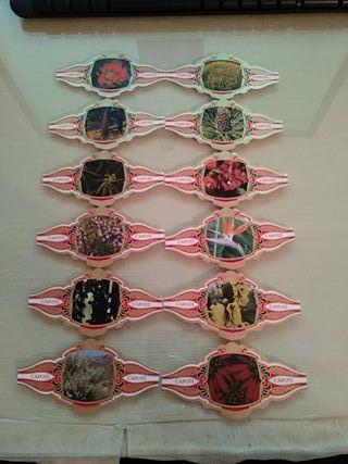 Colección Completa Flores 12 Vitolas - Capote