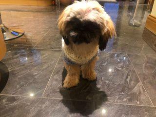 Doggy Sweater