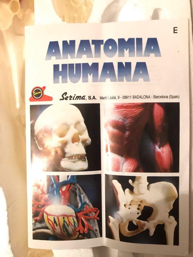 JUEGO ANATOMÍA HUMANA