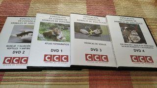 Curso especialista cuidado animales exoticos