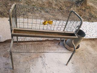 jaula y comedero para gallinas
