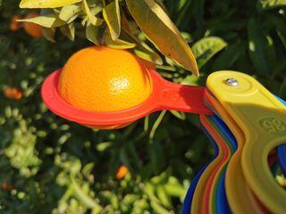 Set de 12 anillas calibrador de citricos
