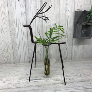 Hydroponic Home Décor Pots, Vase Flower Plant