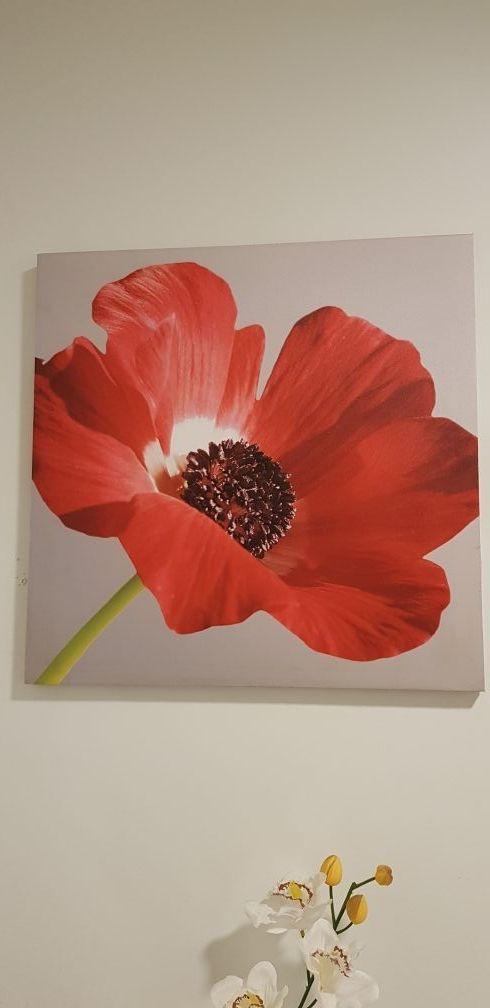 48 x 48 cm canvas