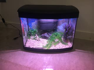 Acuario para peces de agua fría y caliente