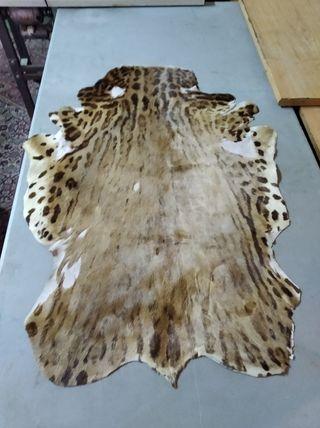 pieles de de cebra y leopardo