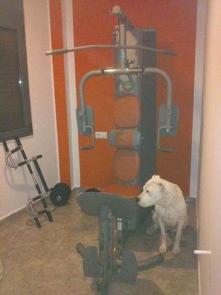 máquina gimnasio musculacion hg90