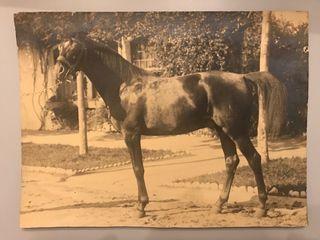 2 fotos antiguas grandes de caballos