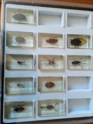 colección bichos