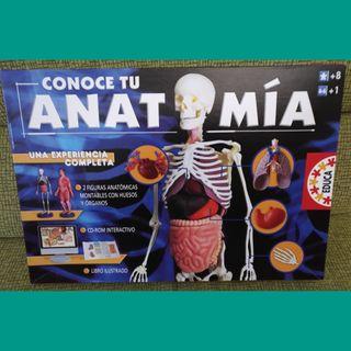 Juego conoce tu anatomía