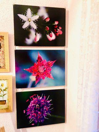 Tríptico de fotos de flores macro