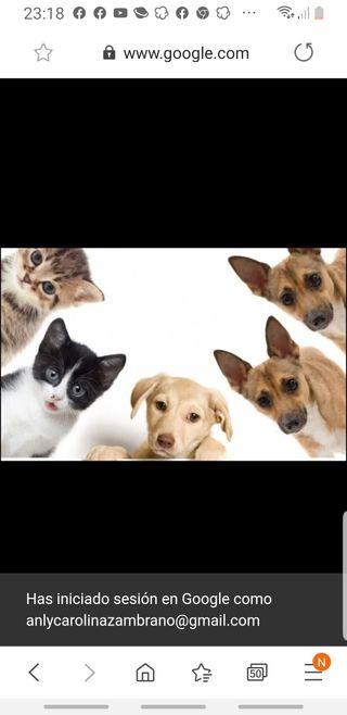 se cuidan mascotas /paseo mascotas