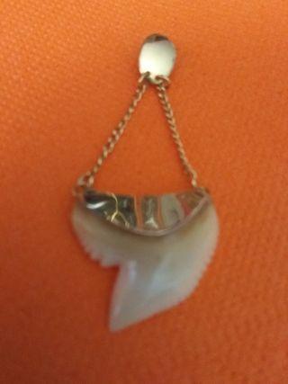 Colgante de oro 18k y diente de tiburón auténtico