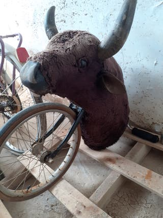 torillo para toreros que se inician