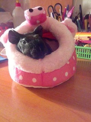 camas roedores