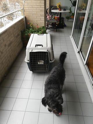 Jaula transporte de perro avión