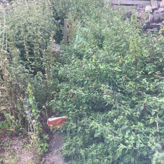 high quality garden services.