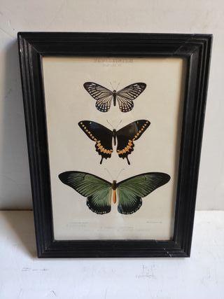 Cuadro mariposas