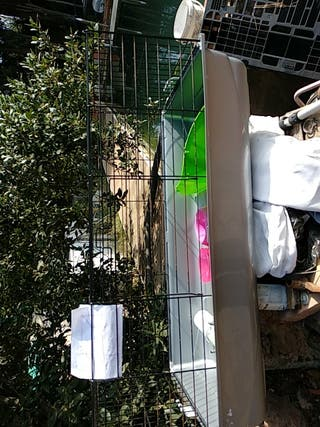 jaula mascotas conejos hámsters con todos los acce