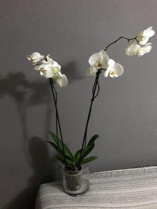 Orquídea con jarrón de cristal plantas