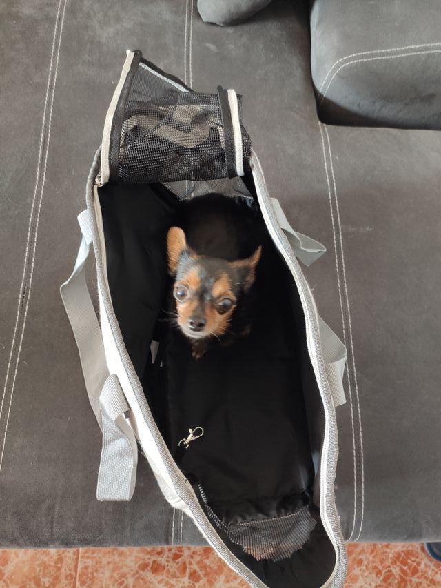 Transportín para mascota