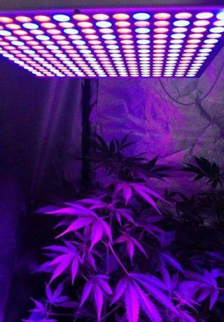 Foco Cultivo led Nuevo, Grow