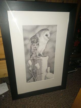 artists owl sketch