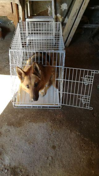 jaula para perro