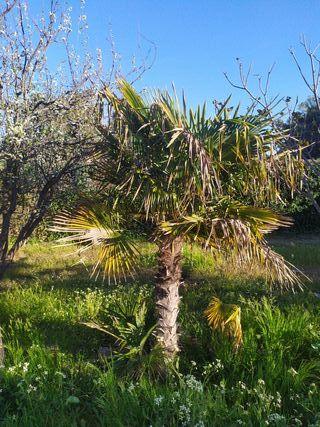 10 palmeras grandes y pequeñas