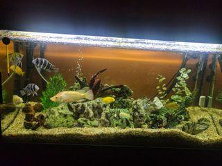 acuario 200 litros