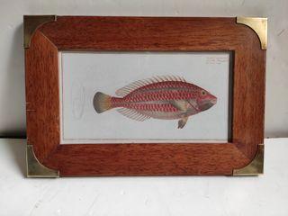 Cuadro pez Vintage granate