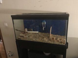 Acuario/terrario con soporte. Para roedores
