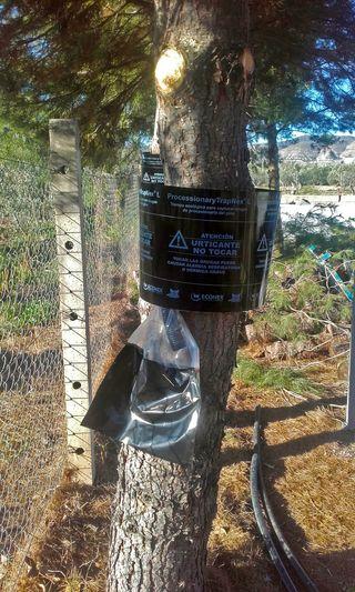 Trampa para oruga de la procesionaria del pino