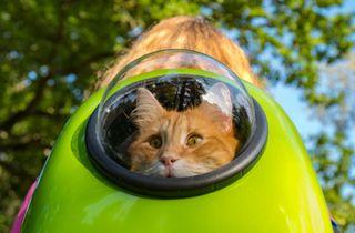 Transportin mochila burbuja gato o perro