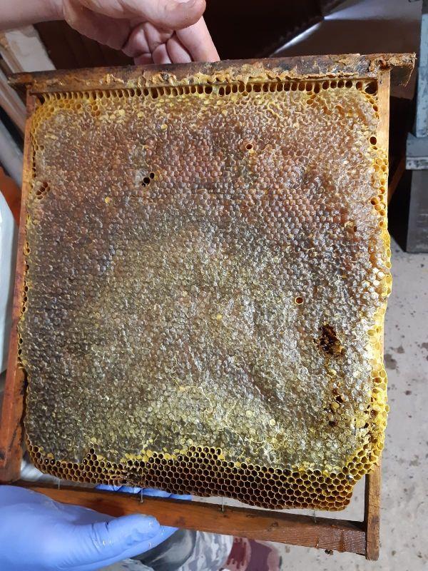recojo enjambres de abejas y material apicola
