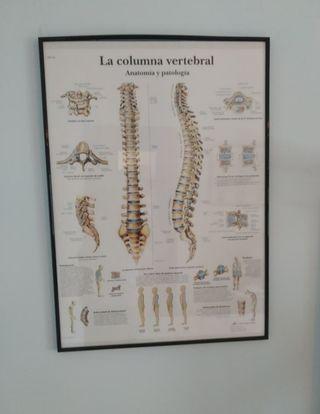 cuadros para consulta de masaje