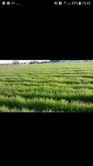 vendo campo tierra vegetal