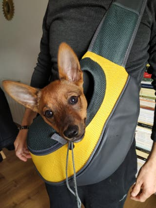 Bandolera transportin para perro