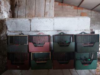 jaulas de cría y de reclamo