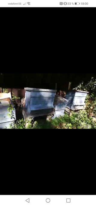colmenas y extractor de miel.