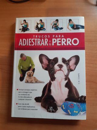 Trucos para adiestrar a tu perro