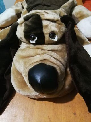 Perro pachón gigante e hijo nuevos con etiqueta