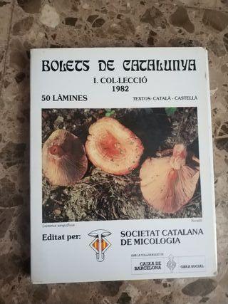 Làmines de 50 bolets de Catalunya