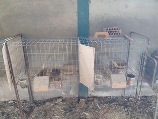jaulas para paloma gallinas conejos etc
