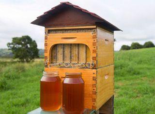 Flow Hive Pack de 3 marcos Langstroth
