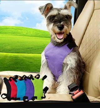 cinturon de seguridad perro