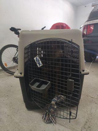 transportín Perro