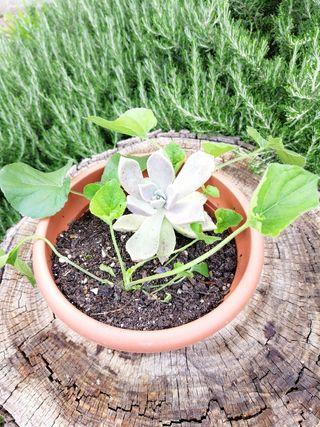 Maceta más plantas