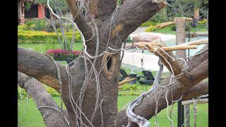 Esculturas, cascadas temáticas, piscinas, etc.