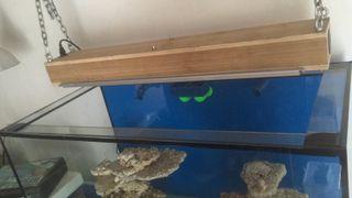 Acuario de arrecife